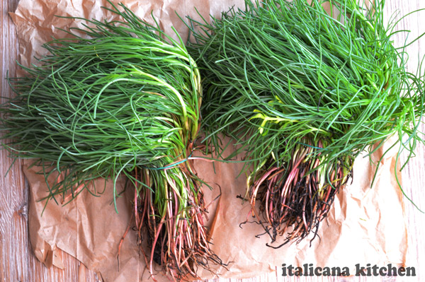 Italian-Agretti-Recipe